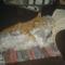 Fricike a talált(2009.ősszel)  cica 9
