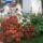 Roth Erzsebet: viragos kiskertem