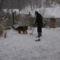 hótakarítás kutyával