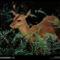 Marsh Deer, Florida, 1996