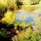 kerti tó tavasszal