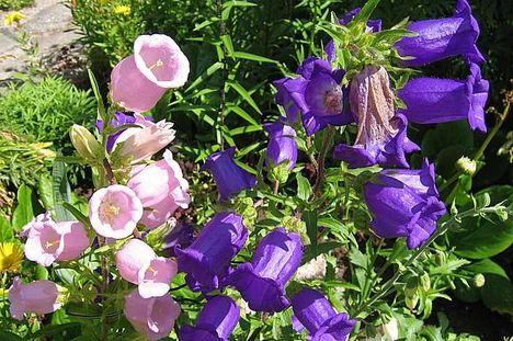 különleges ritka virágok