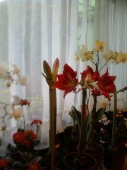 virágzó növényeim