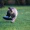 kis kutya, nagy papucs ( Daphnécska)