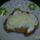Krumplis_langos_590106_61193_t