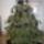 Nagytétényi karácsonyfa kiállítás 2009