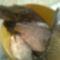 téli hal