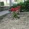 Virágság2