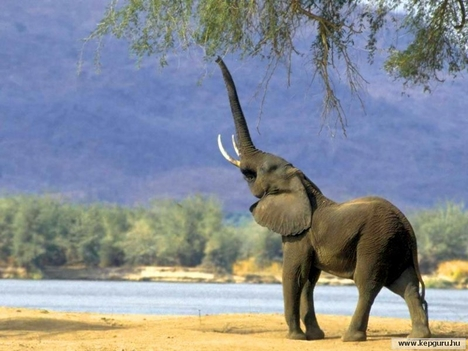 Elefánt-009