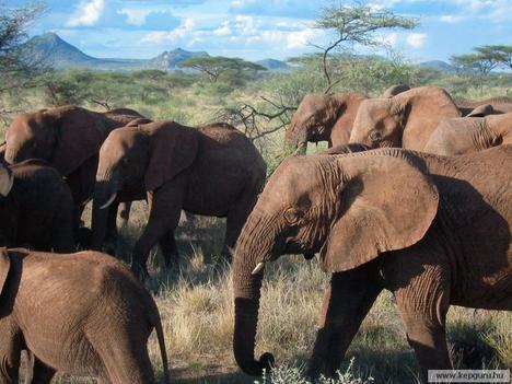 Elefánt-028