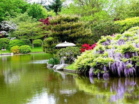 japán kert 13