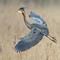 kék madár :-)