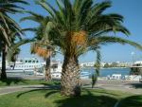 Kos sziget