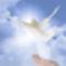 reiki_peaceful_spirit_dove
