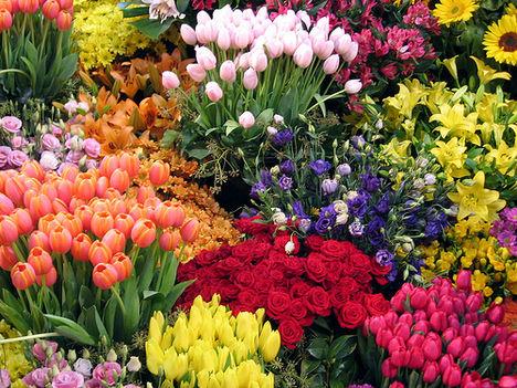 mellbourne-internatioanl-flower-and-garden-show