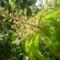 kertünkben-és közelröl