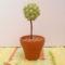 Virágos gyöngybogyóból készült minifa