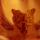 Orchidea3_618009_22368_t