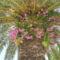 élősködő a pálmafán