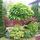 gömb alakú szivarfa