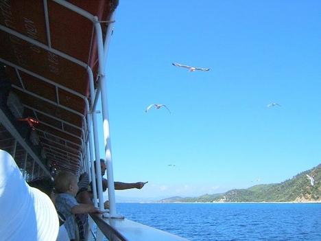 sirályok etetése a hajón