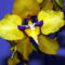 orchideák  különleges szinekkel 16
