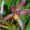 orchideák  különleges szinekkel 5
