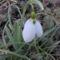 Első virág idén