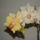Orchideák 017