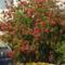 Kefevirág