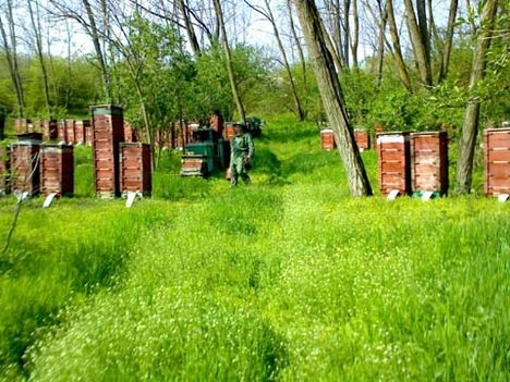 Tavaszi munka a méhészetben_2009
