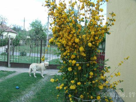 2009.04 Aliz meg az Aranyvessző