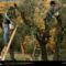 Olive Harvest, Glen Ellen, California, 1996