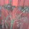 Schefflera virágzása 16
