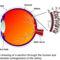 Emberi szem és retina