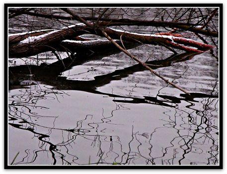 """""""Árnycsikok"""" ,  látomás  a  vízen"""