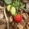 az elsö bioeper a kertböl,