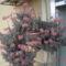 Kalanchoe manginii