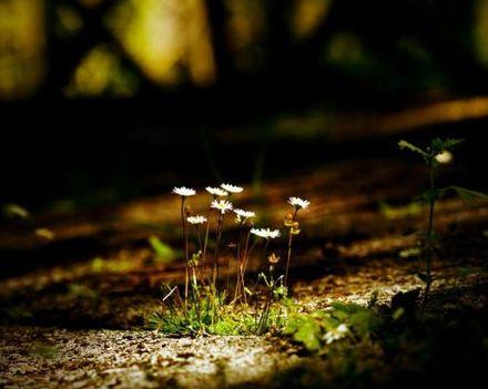 006_ha szépet akartok látni, kezdjetek erdőt járni..