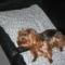 Picur tv-zik(Sajnos 13 évesen mindössze 30 nap alatt egy szörnyü betegség miatt az örök vadászmezökre távozott közülünk)