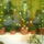 Eskuvoi_dekoracio_603211_93229_t