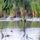 Néhány fotó a Cibakházi-Holt-Tisza élővilágáról.