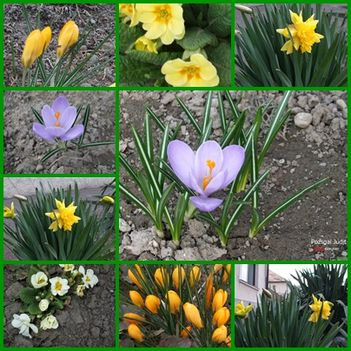 1.A József Attila utca virágai 2010