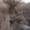 Dunakeszi tőzeglápon tavaszodik! 4