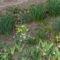 Tavasz a kertekben