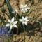 Tavaszi virág 1