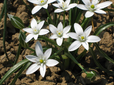 Tavaszi virág 5