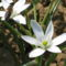 Tavaszi virág 8