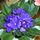 virágok cseri1
