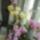 Orchideak-001_652447_34131_t